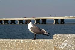 Seagull on Sunshine Skyway Bridge