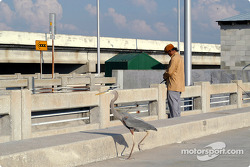 Heron on Sunshine Skyway Bridge
