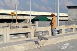 Heron on Sunshine Skyway Bridge