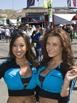 Paddock beauties