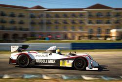 #5 Muscle Milk Pickett Racing Oreca FLM09: Mike Guasch, Memo Gidley, Roger Wills
