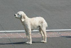 Winners photoshoot: the dog of Dario Franchitti, Target Chip Ganassi Racing Honda