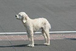 Sesión de fotos de los ganadores: el perro de Dario Franchitti, Target Chip Ganassi Racing Honda