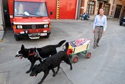 2 dog power