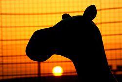 Zonsondergang kameel in Bahrein