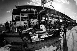 #6 Muscle Milk Pickett Racing HPD ARX-03c Honda