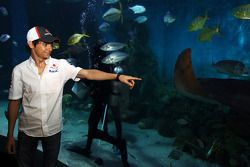 Esteban Gutierrez, Sauber at Melbourne Aquarium