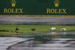 Nice weather for ducks ve seagulls