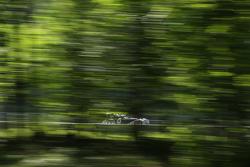 #18 2003 Morgan Aero8 GTR: Tom Hollfelder