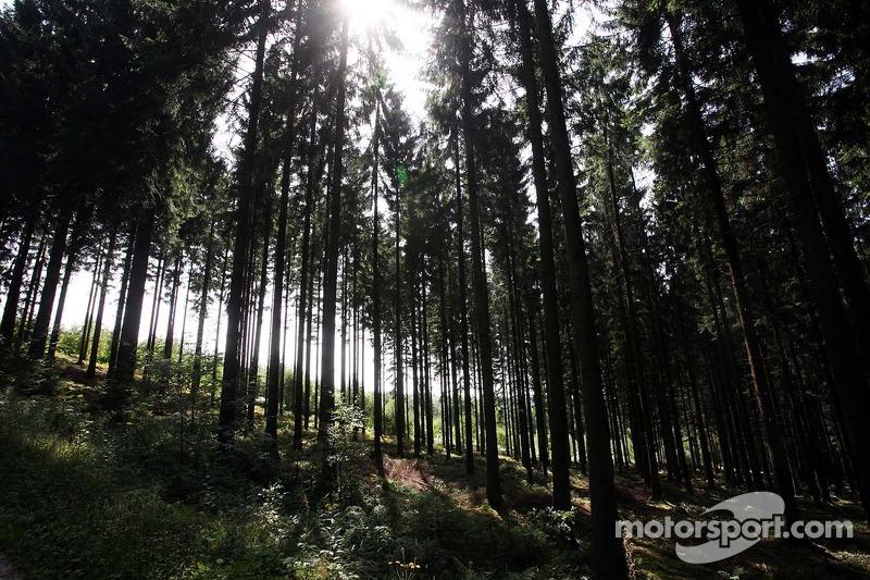 Het bos naast het circuit