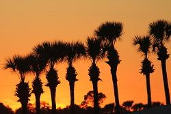 Palmiers à Sebring