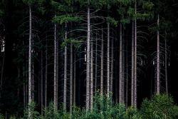 经典的红牛车队树