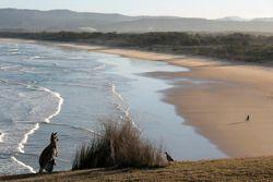 Canguru na praia