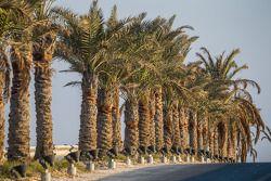Palmbomen op BIC