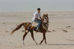 Mark Webber, ve Arab horse