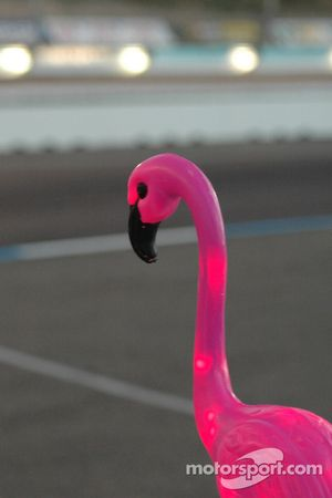 Flamingo watching practice