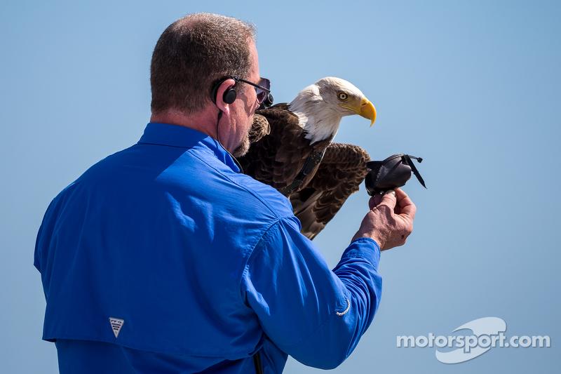 Birds Of Prey Motorsports >> Let The Eagle Fly Di Daytona 500 Motorsport Com