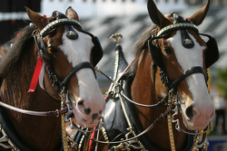 Budweiser Bistro event: horses on the vintage Budweiser delivery carriage