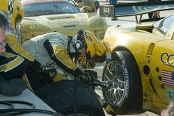 Corvette C6-R : Ron Fellows, Johnny O'Connell, Max Papis