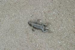 Road Kill au Texas Motor Speedway