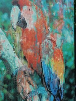 Peinture de perroquet