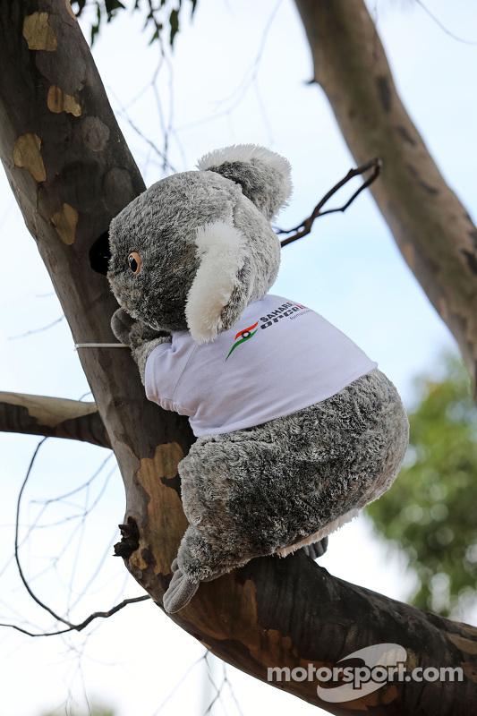 Ein Koalabär von Sahara Force India F1