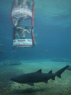 Luiz Razia and Bruno Junqueira at the Ushaka Marine World Shark tank