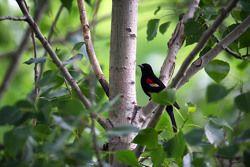 Un uccello tra gli alberi