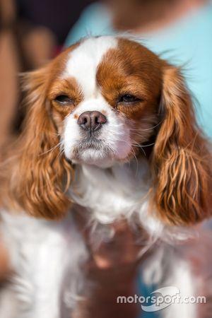 Cachorro durante sessão de autógrafos