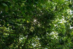 Luz entre folhas na floresta francesa antes do treino de classificação