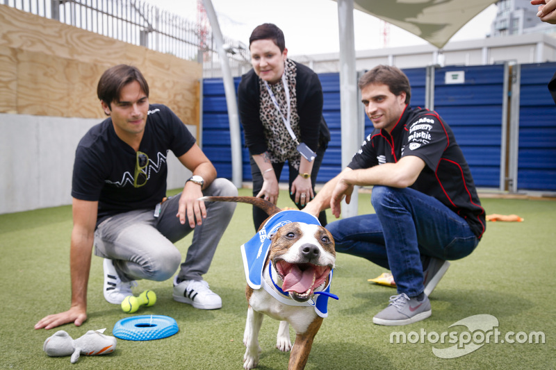Jérôme d'Ambrosio, Dragon Racing, und Nelson Piquet jr., China Racing, beim Besuch des Battersea-Hunde-Tierheims