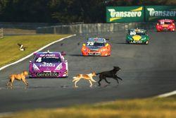 Perros invaden pista en Curitiba