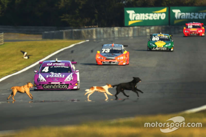 Dogs invade the track at Curitiba