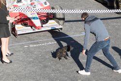 Un pequeño perrito invade el pit line