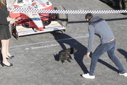 Un chien sur la piste