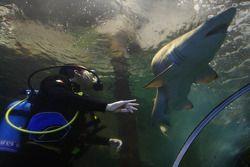David Garza, driver of A1 Team Mexico at the shark dive tank at Ocean world, Sydney