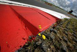 Silverstone Kerbs