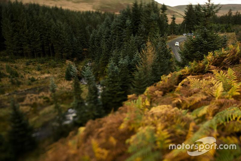 Atmosphäre in den walisischen Wäldern