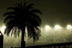 Un palmier de nuit