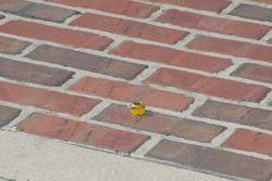 A lone lug nut sits on the famous