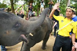 Fairuz Fauzy, driver of A1 Team Malaysia at the Gandah Elephant Orphanage