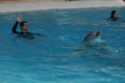 Neel Jani, driver of A1 Team Switzerland swims with Dolphins