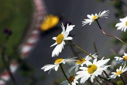 Des fleurs et de l'action