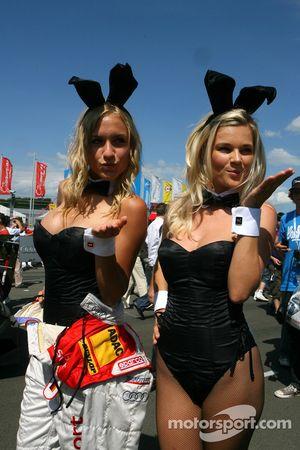 Lapins Playboy sur la grille