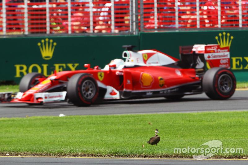 10: Гран Прі Австралії, Альберт-Парк. Себастьян Феттель, Ferrari SF16-H, проїжджає качку