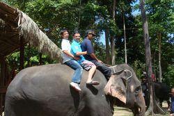 Loris Capirossi, Rizla Suzuki MotoGP and an elephant