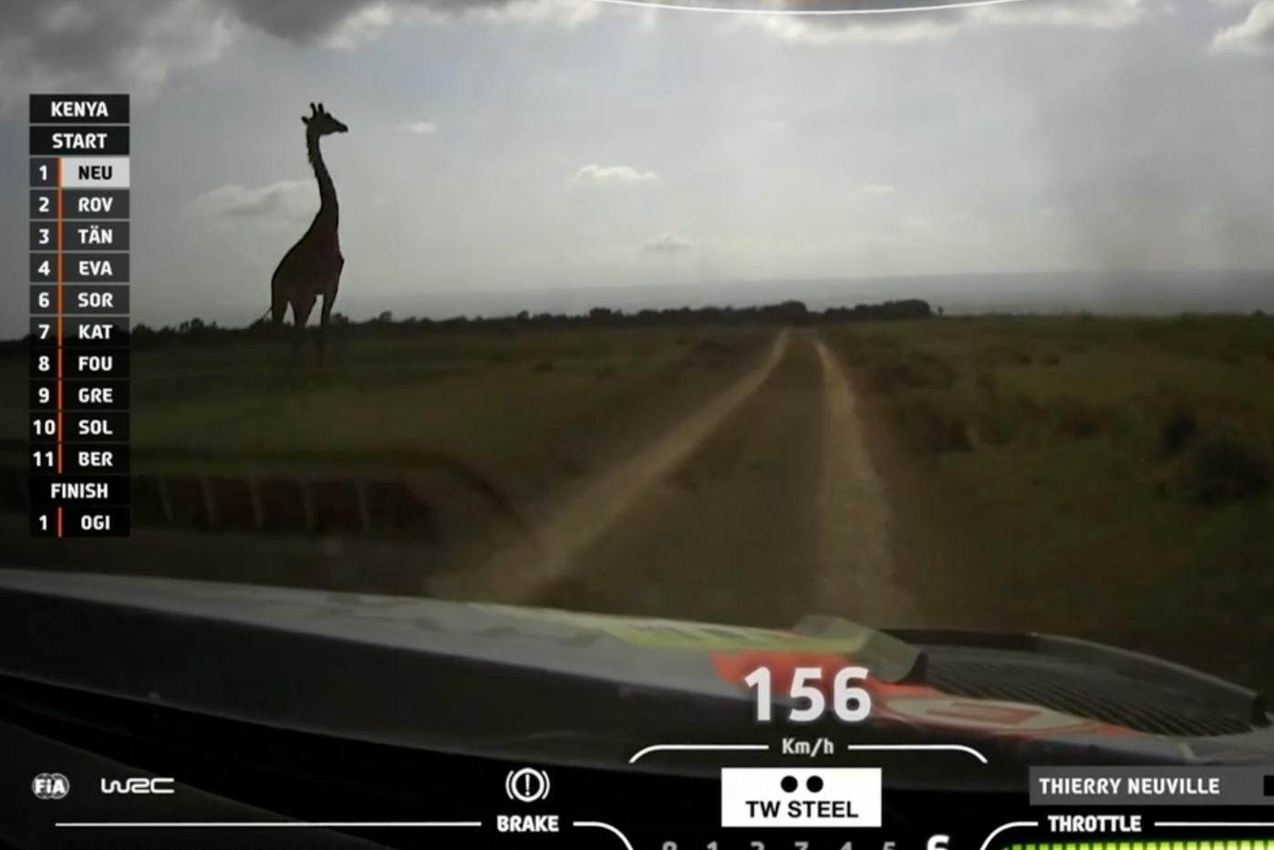 Neuville comes close to a Giraffe
