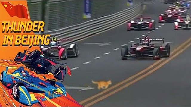 Cat On The Track During Formula E Race In Beijing!