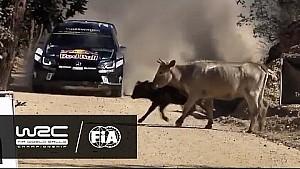 WRC 2016 Özeti: Meksika Rallisi