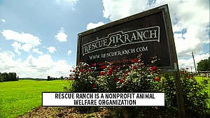 Rescue Ranch launches Earnhardt family playground